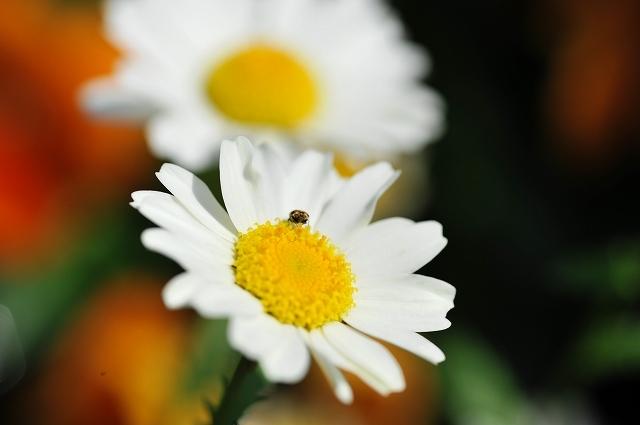 ケメコ (14).jpg