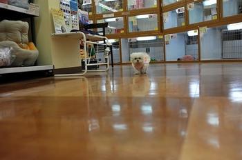 ケメコ (21).jpg