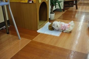 ケメコ (7).jpg
